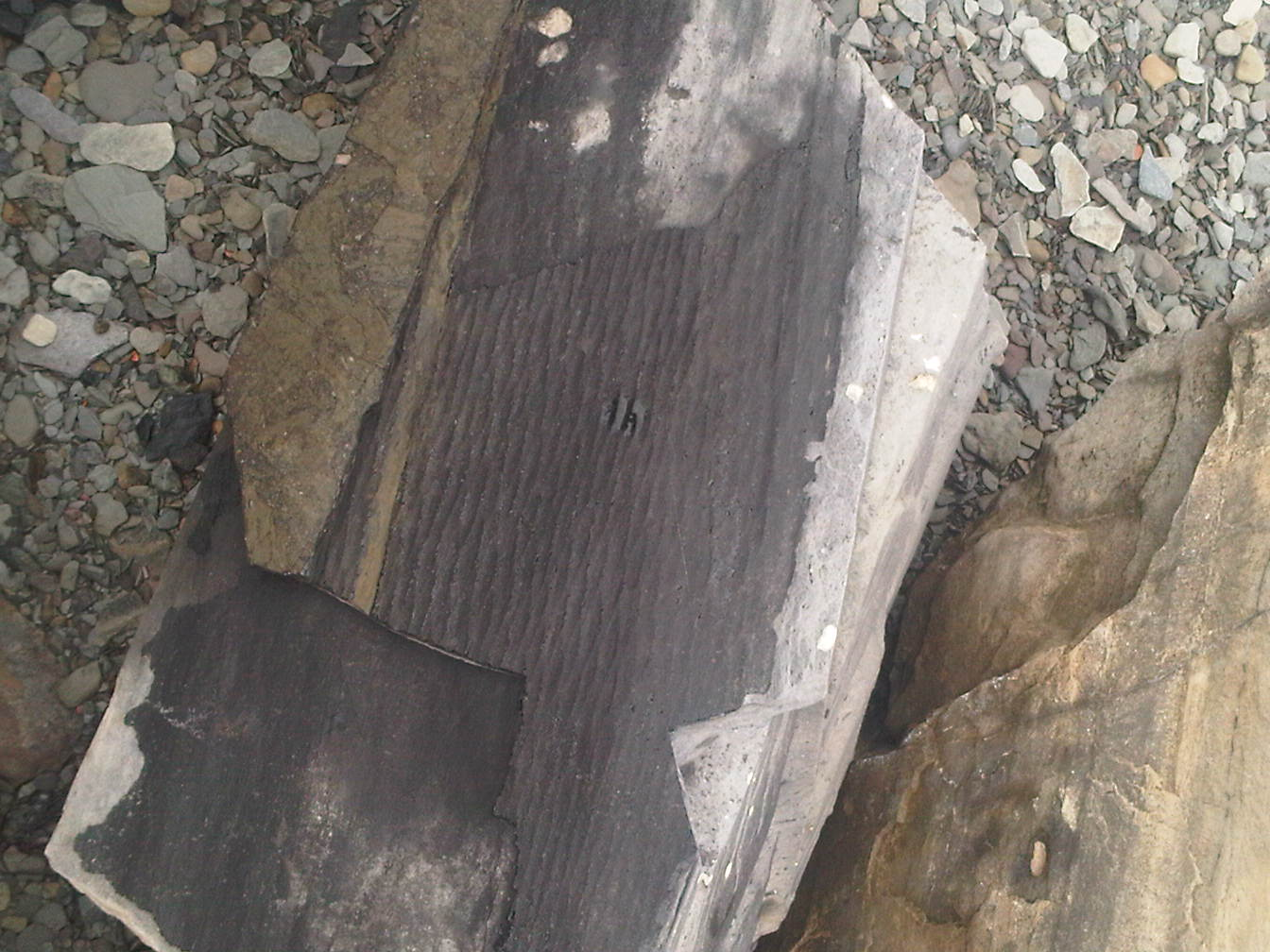 Fossilized Tree Bark